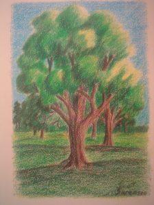 Landscape-2nd Sale